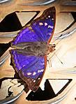 Бабочки садятся на мостки прямо под ноги