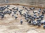 Почему — то здесь, на территории мечети, очень много голубей.