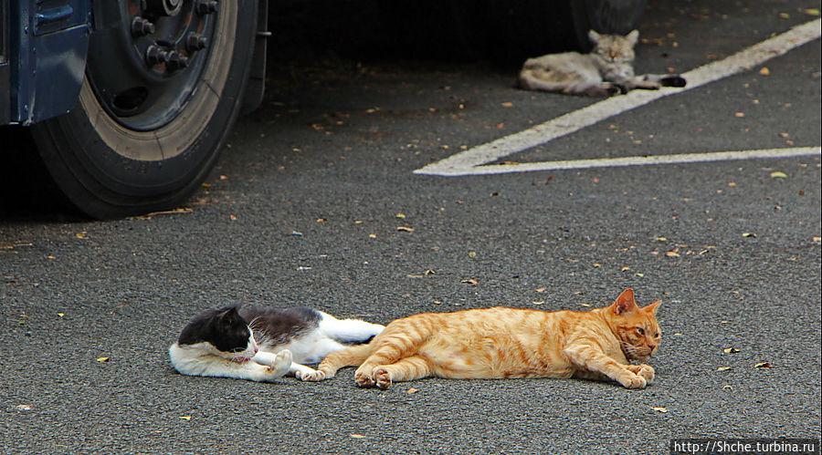 Лежбище котиков на Гавайях Канеохе, Соединенные Штаты Америки