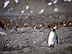 пингвин решил что заблудился  но посмотрев по сторонам  он осознал что приключений  топографически лишён