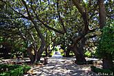 При входе в парк нас встречают величественные, гигантские деревья — это инжир