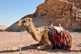 Первым, кто встретил нас на иорданской земле после пограничников, был этот верблюд, конечно же, со своим погонщиком, предлагавшим с ветерком прокатиться по жаркой пустыне.