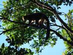 Ну и стоит ли ехать на Мадагаскар ради лемуров? Ответ однозначный — НЕТ. Но я и не за ними сюда ехала, поэтому разочарования не получилось ))