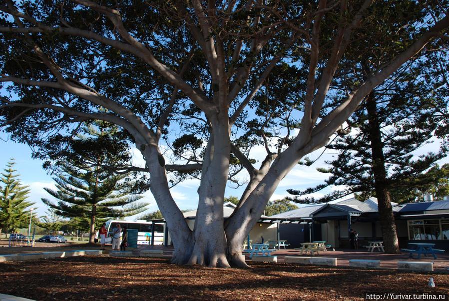 Западная Австралия. Экскурсия из Перта на юг до мыса Леувин Маргарет-Ривер, Австралия