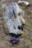 Здесь и на скалах цветы прорастают.