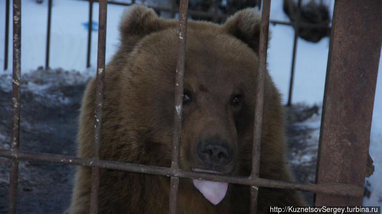 Медведи в этнокультурном