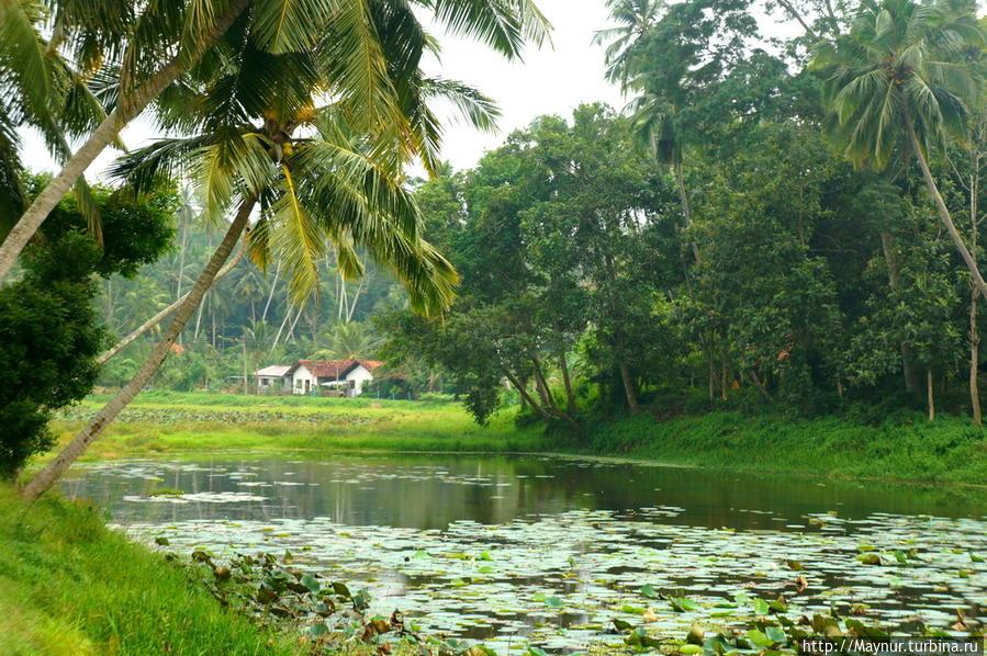 Озеро   искусственное.  Оно   предназначено   для  орошения  рисовых   полей. Тангалла, Шри-Ланка