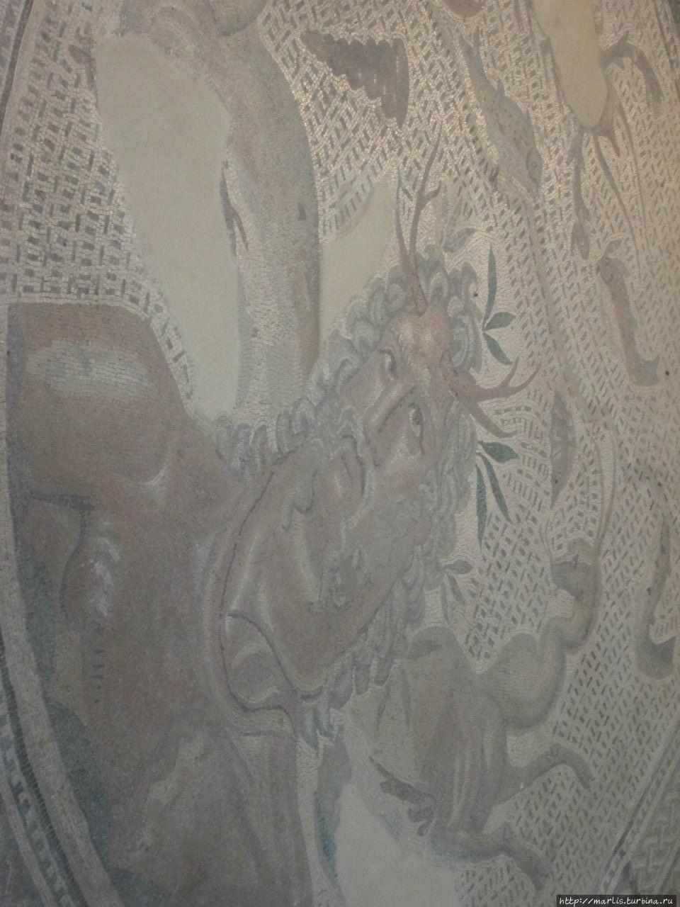 фрагмент Морской мозаики