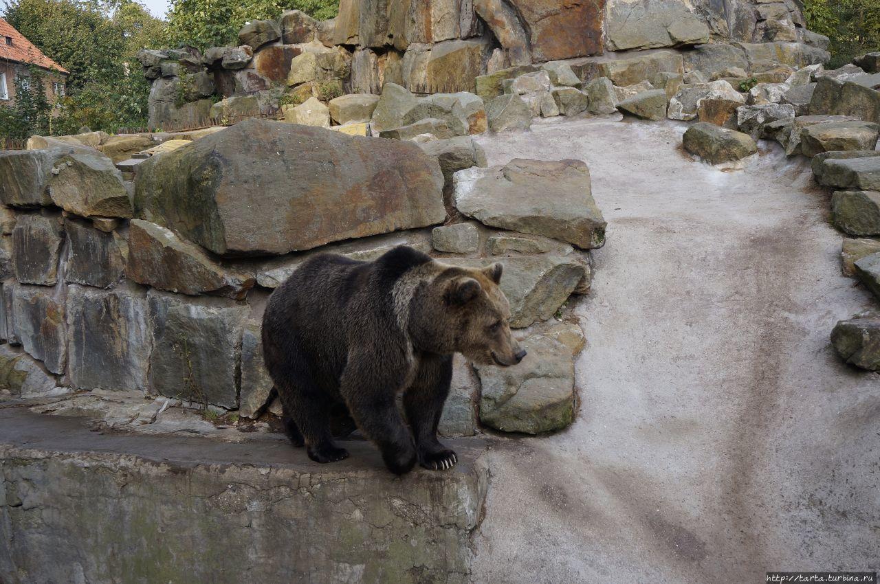 Калининградский зоопарк Калининград, Россия