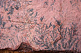 Фото растительного рисунка на Синайском камне в монастыре Святой Екатерины.Это уже камень размером 40х50.