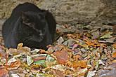 может спал он так уже долго, а дворники все загребали и загребали разноцветные листья к нему под скамейку