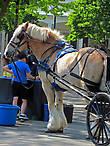 Богатырский конь