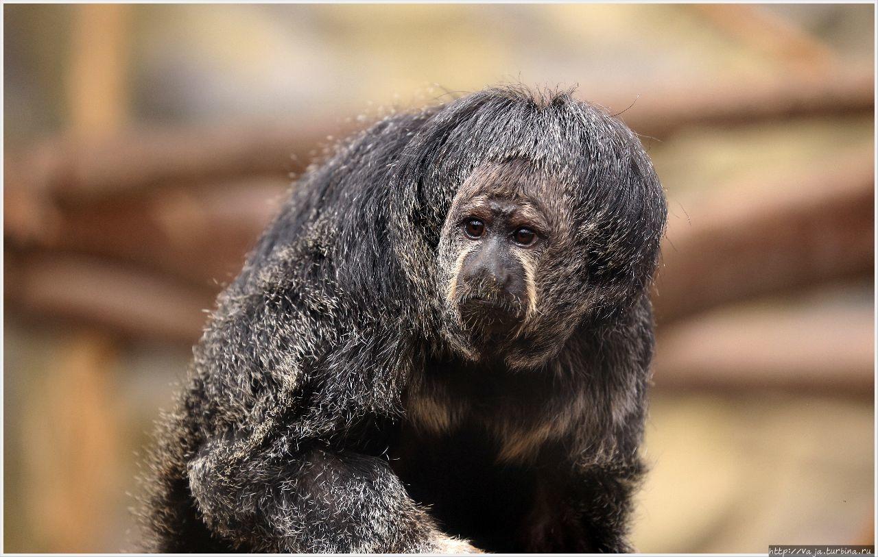 Зоопарк Лимы. Перу Лима, Перу