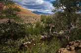Долина реки Кызыл Чин. У подножия Марса.