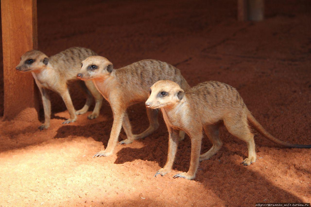 Новый год в Намибии. Часть 3. Ужин с гепардами.