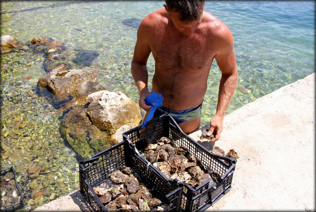 рыбалка в которском заливе