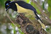 Птицы у водопадов Игуасу.