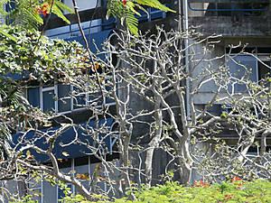Жуткое совершенно здание. Но краса растений, как-то умудряется всё поправить.