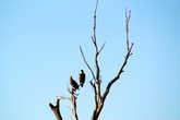 Орланы на отдыхе
