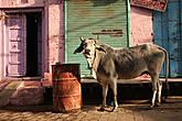 Индия, Вриндаван