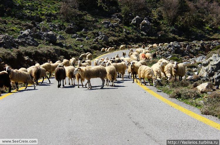 пробки на дорогах Крита