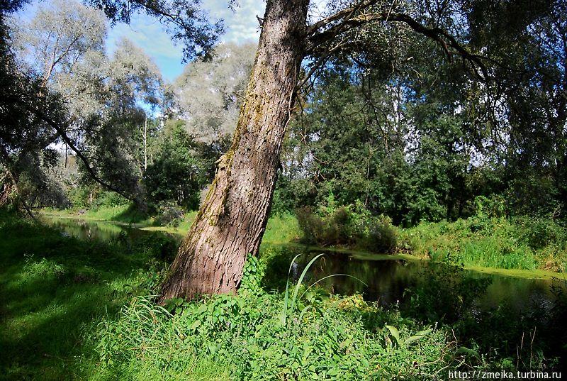 Часть ее проходит по болотистой местности. Даже одна из стоянок там названа как-то по-болотному.  Так вот, не очень приятное место. Мне показалось, что там душно, липко и куча насекомых. Зато потом выходишь из этой местности — свежий воздух)