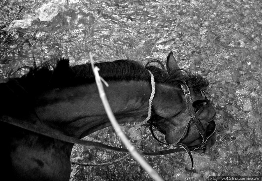 Для меня было сложно то,что лошадка постоянно наклонялась за травкой или попить водички...))))