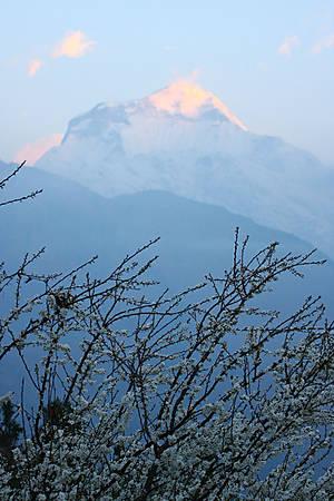 Дхаулагири (8167м) в первых лучах восходящего Солнца