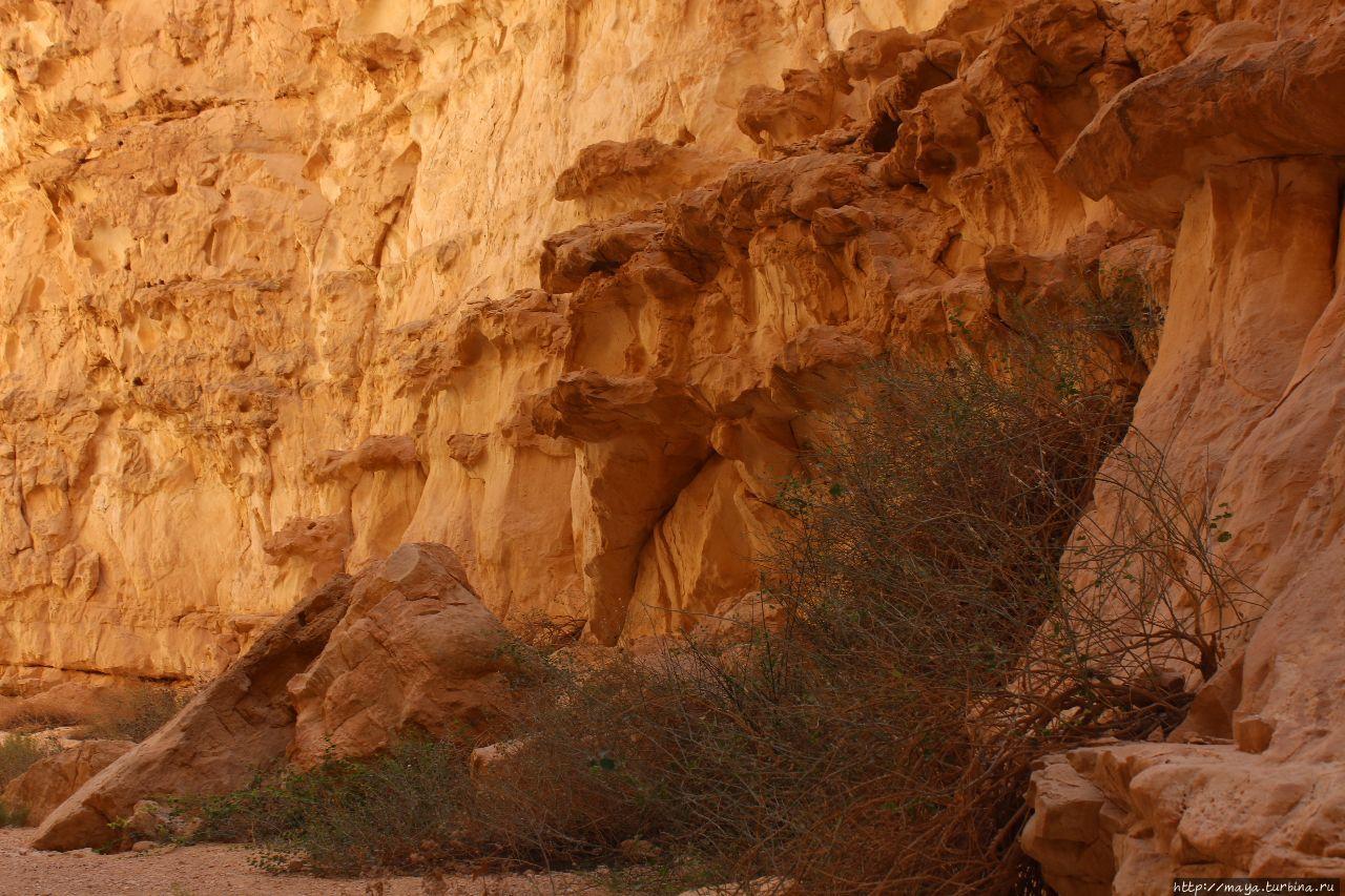 Ущелье  Барак: Здесь начинается Африка Арава Пустыня, Израиль