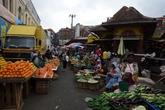 Рыно в тане