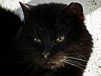 А этот котейка, судя по всему, местная достопримечательность. Вёл себя как-то неадекватно. Выяснилось, что он слепой. И нам поведали историю про то, как в какой-то год собрали всех котов на острове и отправили на материк. И этот кот был единственным, кто сам вернулся. Вот только был ли он уже слепым на тот момент, не уточнили.