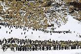 пингвин в пингвина на дуэли вонзил клинок и провернул а тот стоит не шелохнётся лишь губы шепчут отомщу