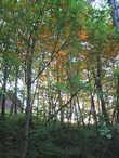 Подходя к морю и глядя на воспламененную листву деревьев можно начинать радоваться. Море сегодне будет