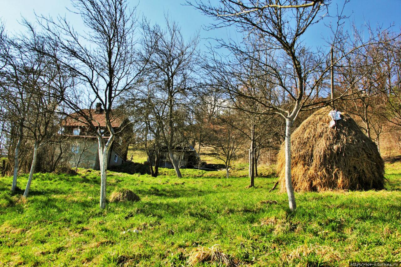Местные окрестности дерев