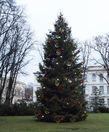 А пошли мы в путь от новогодней ёлки, которую установили на зелёной лужайке на Замковой площади напротив резиденции президента Латвии.