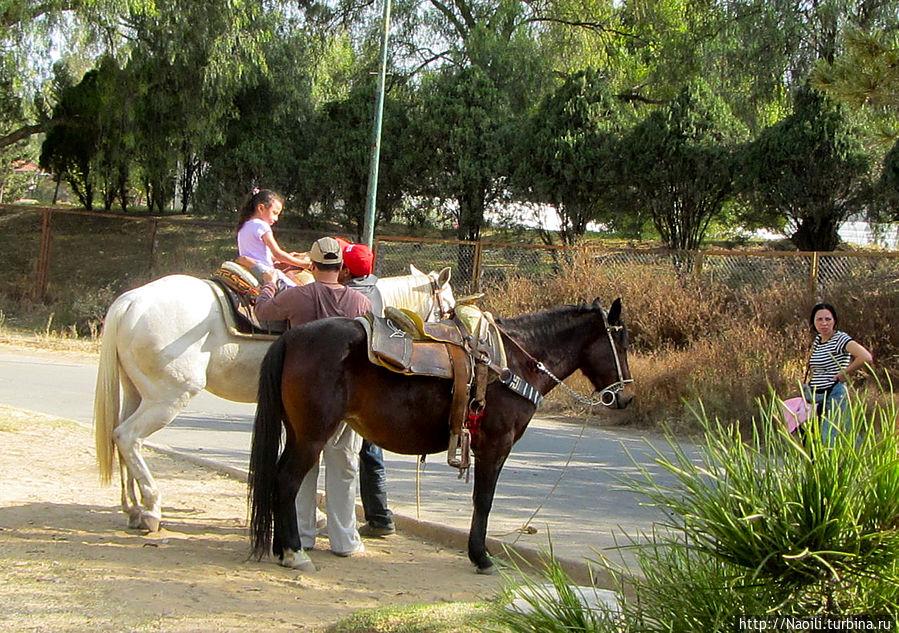 Здесь можно покататься на лошади
