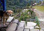 В Нью Бридже живет замечательный рыжий пес-проводник