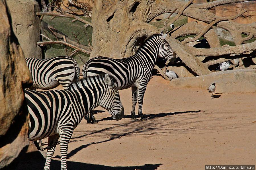 закончили на зебрах, все логично :-) Они на З + все герои Мадагаскара в сборе (пингвины не в счет)))