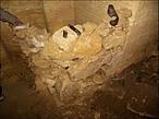 В таких загончиках люди, прятавшиеся в катакомбах от немцев, держали птицу.