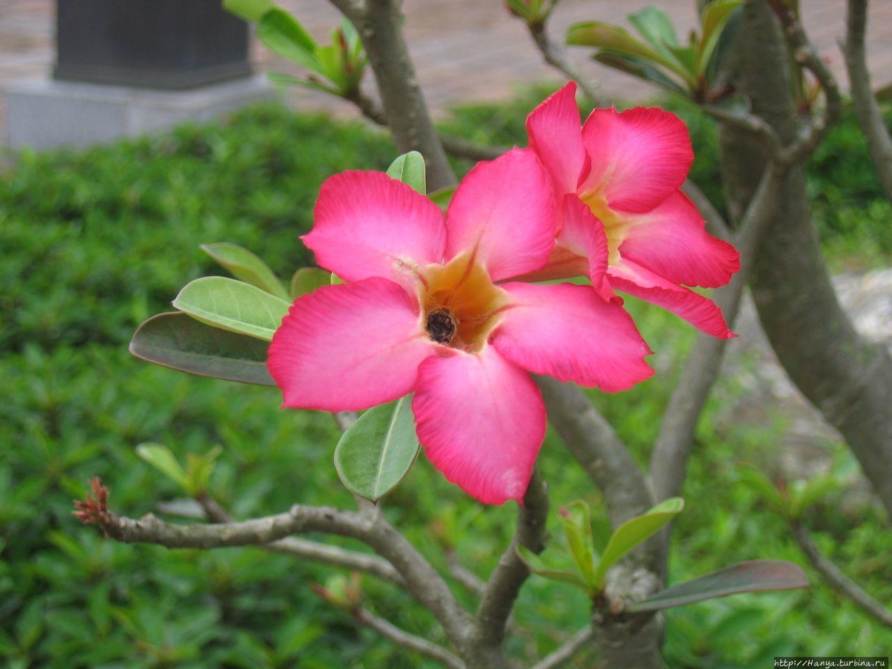 Хюэ. Цветы