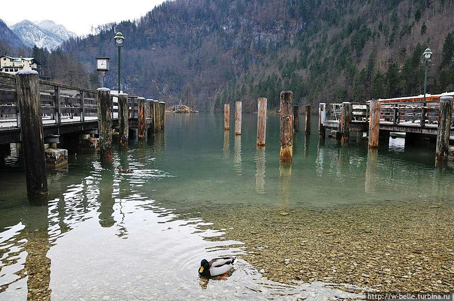 Кёнигсзее (нем. Königssee) — вытянутое по форме с юга на север озеро на юго-востоке Баварии, расположенное в районе Берхтесгаден в окружении высоких гор, как, например, Вацманн (третья вершина Германии). Рамзау-Берхтесгаден, Германия