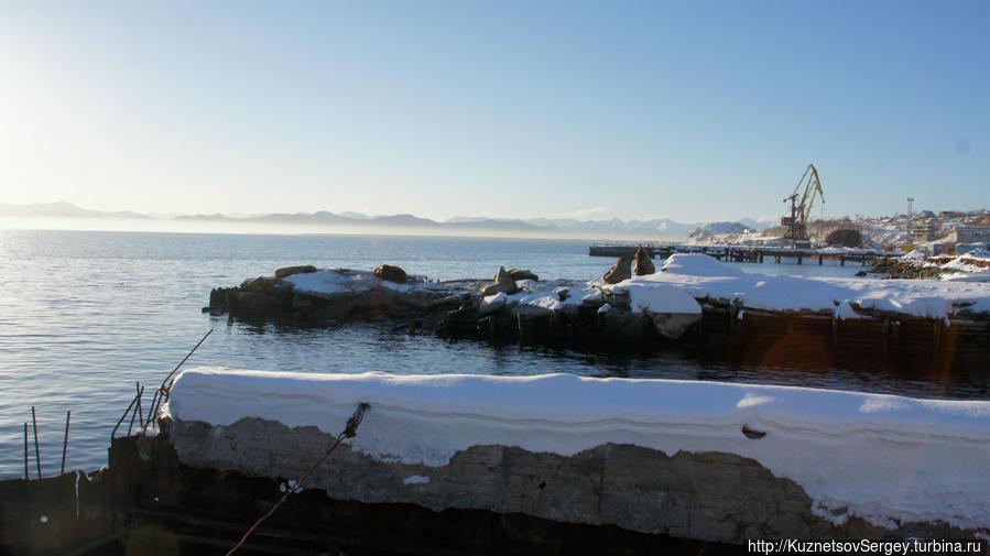 Лежбище сивучей в Моховой бухте