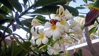 Цветы на территории отеля настраивают на позитивное восприятие