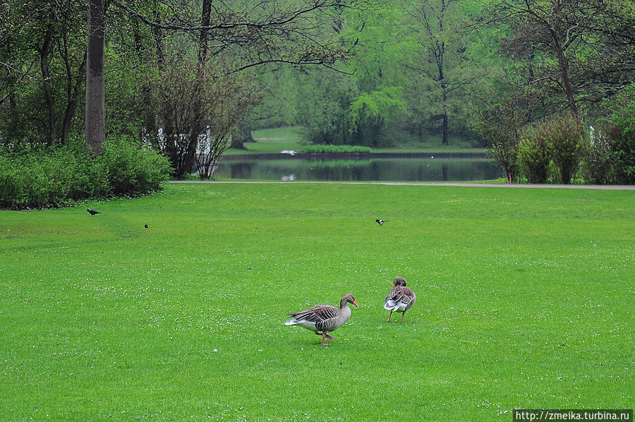 Сразу у входа встречаемся с первыми обитателями парка — гусями, которые довольно свободно себя тут ведут и даже пытаются защищать территорию!
