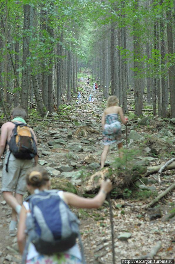 Буковый лес. Путь обратно был сложнее, так как приходилось подниматься by Константин Волнягин (http://vk.com/volnyagin)