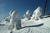 Спящие стражники вдоль лыжни...