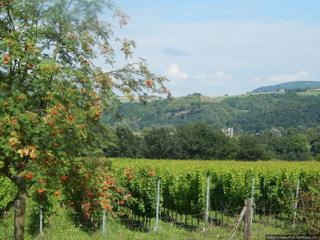 Эти виноградники разбиты еще римлянами