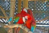 Попугай знает слово