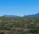 В апреле бескрайние поля, раскинувшиеся прямо за горами, выглядят именно так и никак иначе.