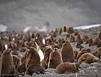 пингвин не сделан чтоб работать  в нем нету икроножных мышц  в нём бицепс с трицепсом не сыщешь  он сделан любоваться им